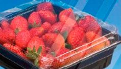 Cestas para Fruta - BERRIPACK